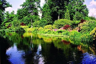 windsor_savill-garden